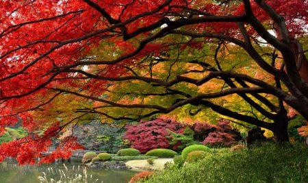Những điểm đến ngắm lá đỏ tuyệt vời ở Nhật Bản